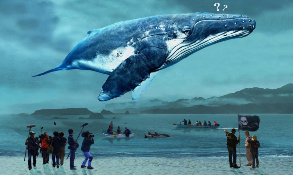 《鯨世爭議》繼奧斯卡最佳紀錄片血色海灣後再次探究日本捕鯨文化。
