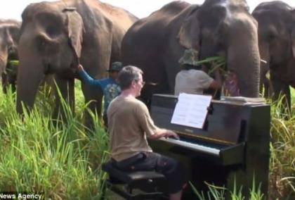 古典音樂_大象聽音樂