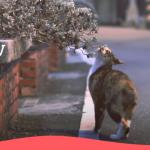 【週五看MV】原子邦妮釋夏季療癒單曲 五五身變神祕生物登加里山