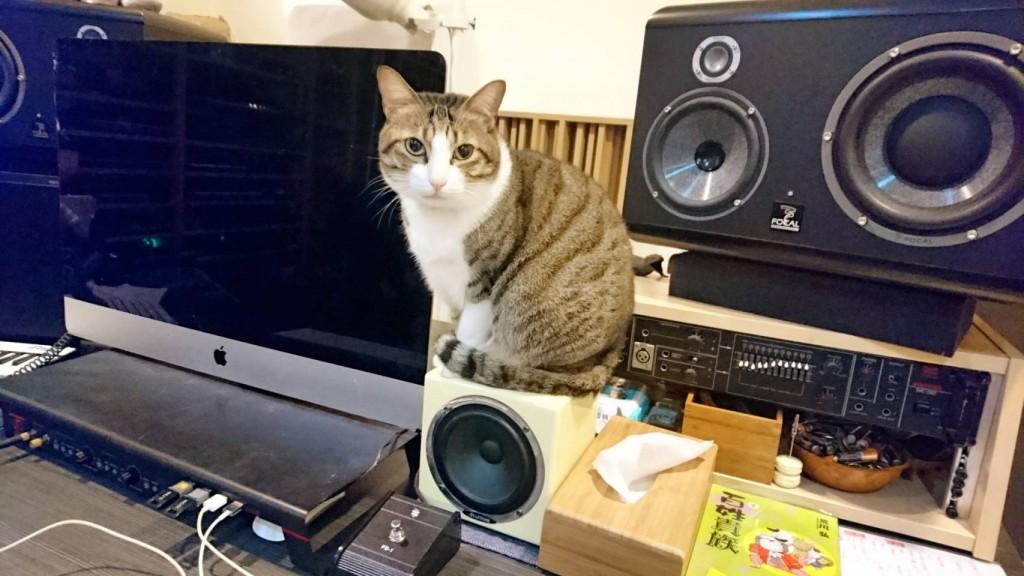 貓咪小波本人