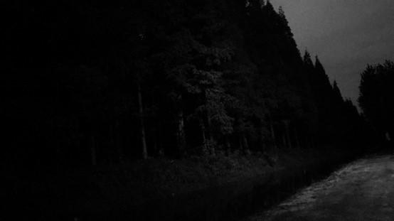 樹林也睡了(莫西子詩攝於 2016 年)